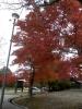野呂の紅葉