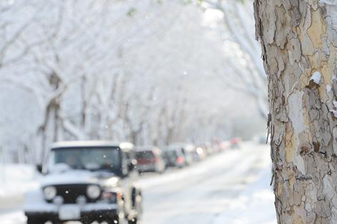 プラタナス並木 雪景色