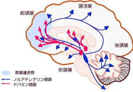 脳内ドパミン