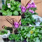 121121flowers.jpg