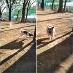 20121103dogrun1.jpg