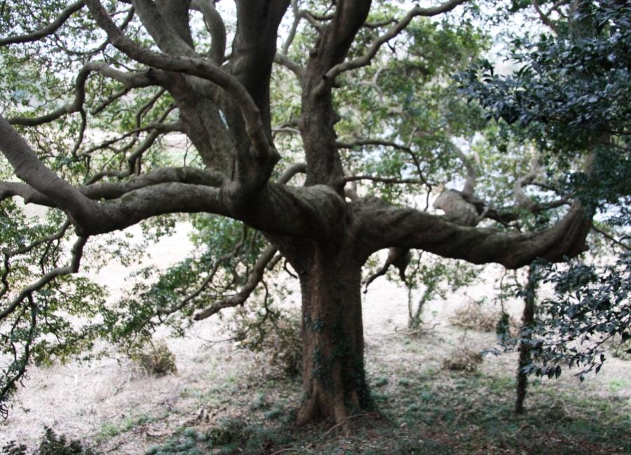 木 モチモチ の