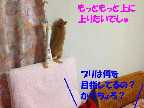IMG_3446.上る