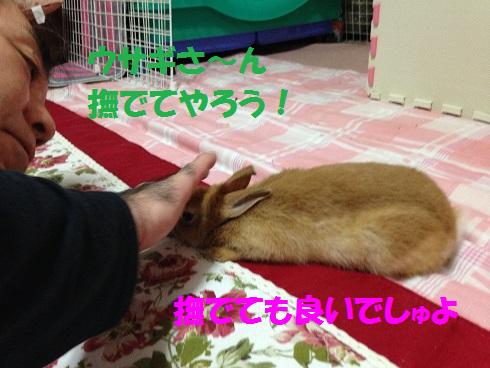 IMG_3038ナデ