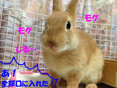 IMG_3243.みかん