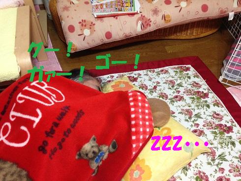 IMG_3395.ケモノ・ケダモノ