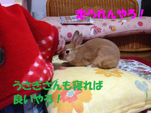 IMG_3394.ケモノ・ケダモノ