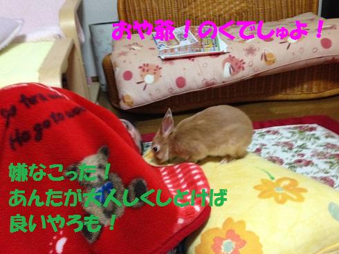 IMG_3390.ケモノ・ケダモノ