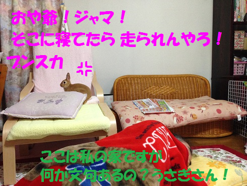 IMG_3388.ケモノ・ケダモノ