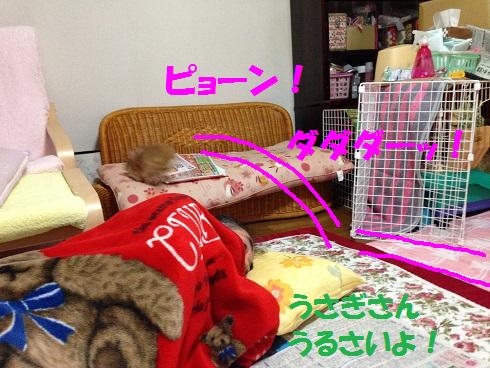 IMG_3380.ケモノ・ケダモノ