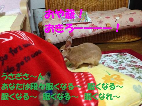 IMG_3389.ケモノ・ケダモノ