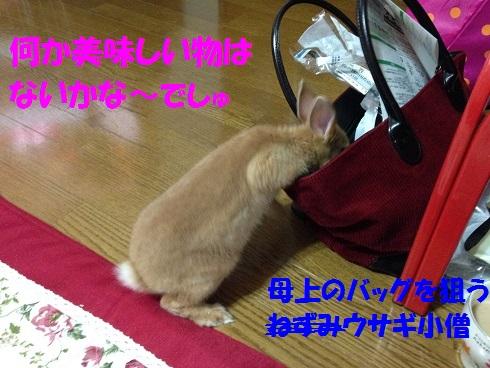 IMG_3229.jpg