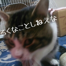 tmp_image_2L4PZe.jpg