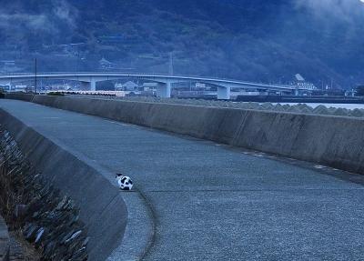 1肱川あらし14.01.05