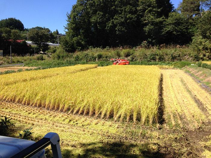 農繁期  2013 秋 コシヒカリ 2