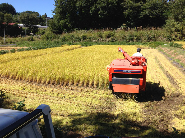 農繁期  2013 秋 コシヒカリ 1
