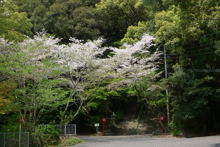 薩摩川内市 新田神社 6