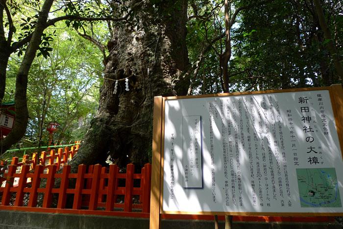 薩摩川内市 新田神社 11
