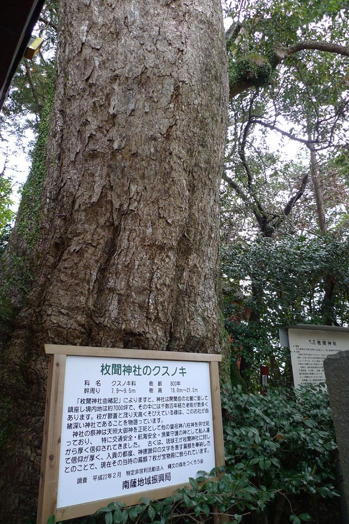 指宿市 枚聞神社 6
