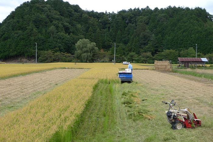 農繁期 秋 2013 稲刈り 1