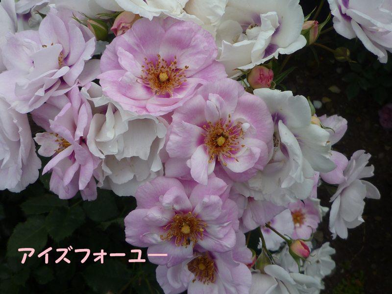 20130521aizufo-yu-.jpg