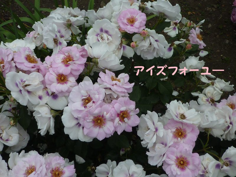 20130521aizufo-yu-1.jpg