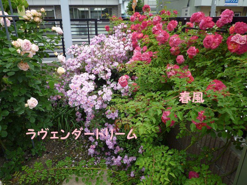 20130521hokutouniwa1.jpg