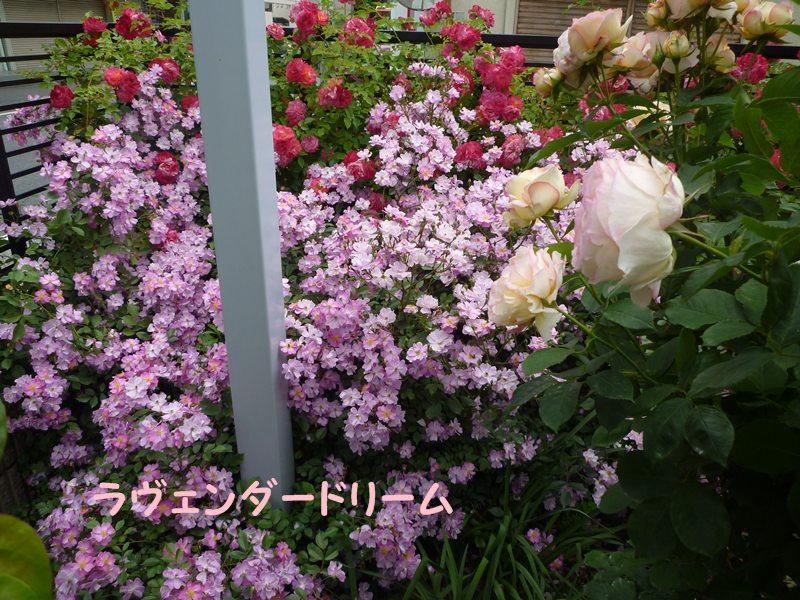 20130521hokutouniwa3.jpg