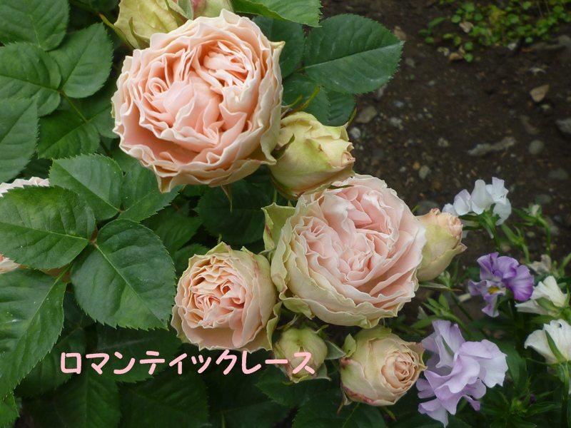 20130521romantekkure-su2.jpg