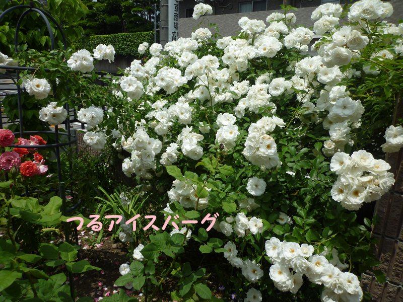 20130522tsuruaisuba-g.jpg
