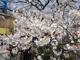 京都 春  085