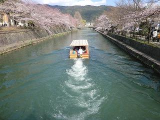 京都 春  113