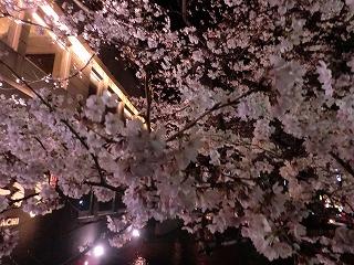京都 春  139