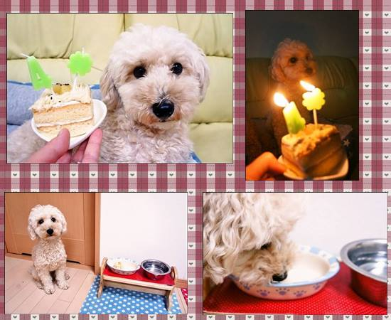 奏ちゃんお誕生日2