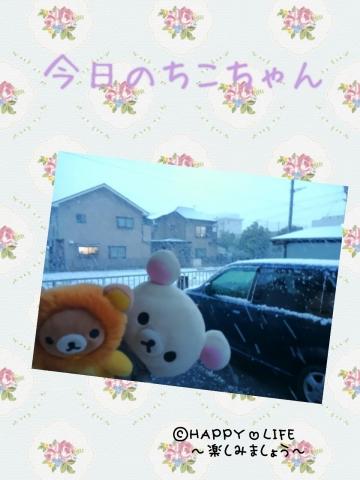 今日のちこちゃん②雪でしゅよ-1