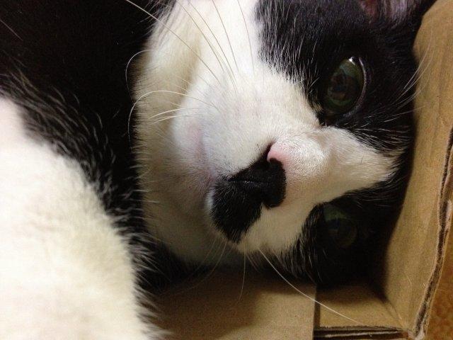 この猫ダラケ過ぎである05