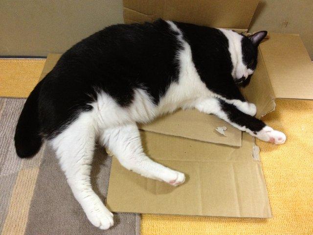 この猫ダラケ過ぎである01