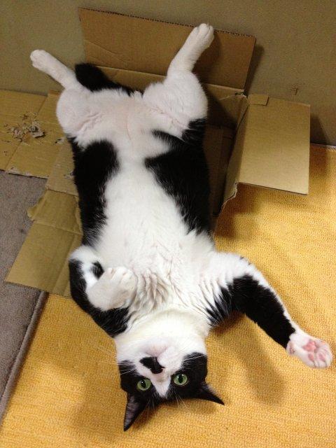 この猫ダラケ過ぎである07