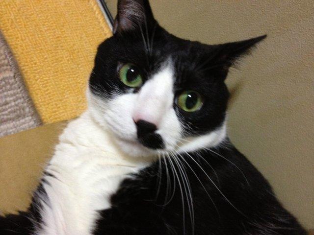 この猫ダラケ過ぎである16