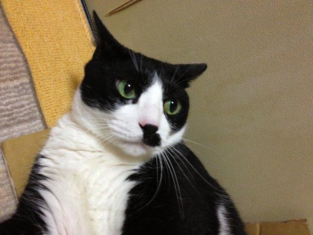 この猫ダラケ過ぎである17