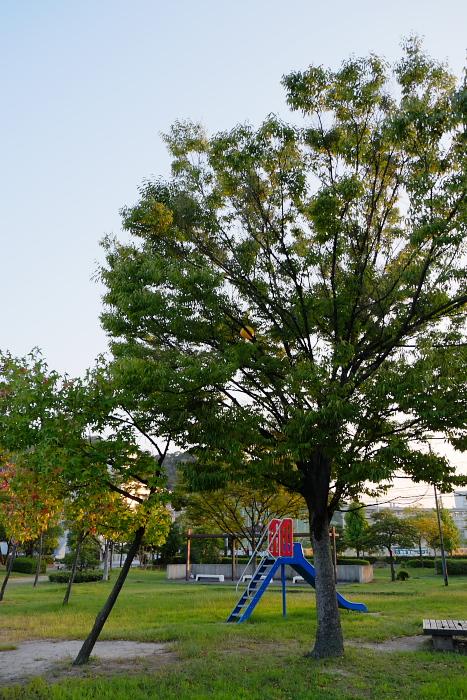 DSCF8313.jpg