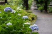s13_tokueiji_20130623_03a32JPGc.jpg