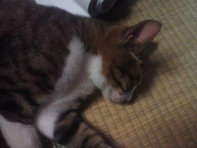 眠るはな_convert_20121022001155