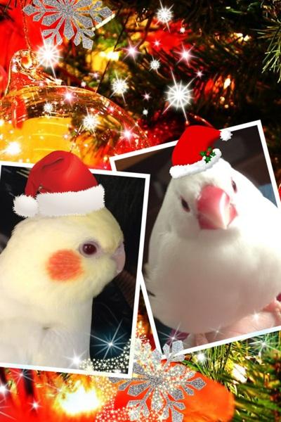 fc2blog_20121226101809269.jpg