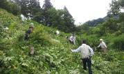 2012-07-01 岩田神社草刈り2