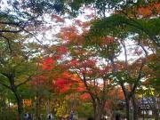 2012-11-04 もみじ園