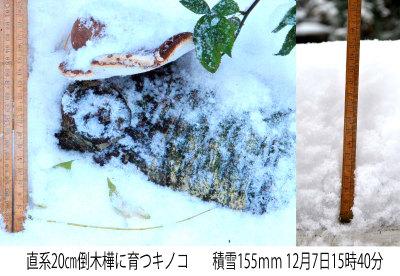 Sneeuw en Berkenzwam 03