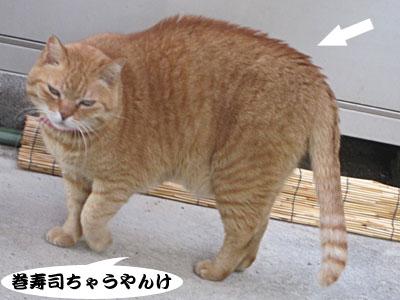 13_03_03_2.jpg