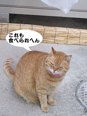13_03_03_5.jpg
