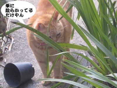13_03_08_3.jpg